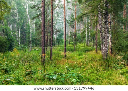 Beautiful summer landscape with forest - stock photo