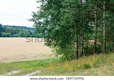Beautiful Summer Landscape with poplars, motley grasses and wheat field - stock photo