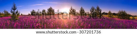 beautiful summer landscape with the blossoming meadow, sunrise.panorama - stock photo