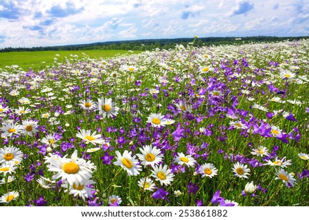 beautiful summer landscape with the blossoming meadow with flowers - stock photo