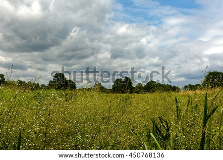 Beautiful summer landscape with wet meadow overgrown with dense, tall vegetation under blue sky with clouds in summertime, Poland. Horizontal view.