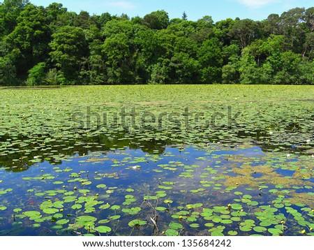 Beautiful summer pond, Scotland - stock photo