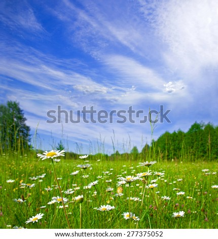 beautiful summer rural landscape with a blossoming meadow and the blue sky - stock photo