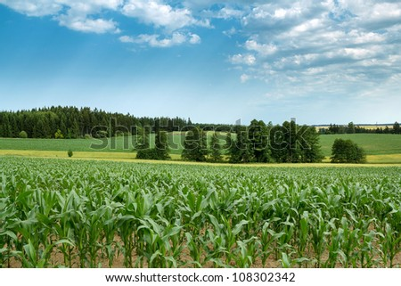 Beautiful summer rural landscape with green corn field and blue sky - stock photo