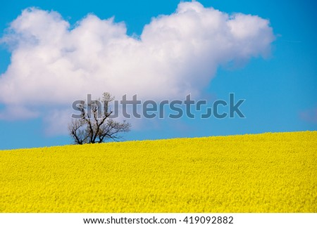 Beautiful summer rural landscape with rape field and blue sky. Rural landscape. Spring landscape. Yellow rape field in countryside. Beautiful Czech highland countryside - stock photo