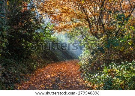 Beautiful sun rays falling on a golden empty footpath. Fall moody image - stock photo