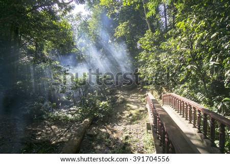 Beautiful sunbeams in the forest at morning. Nature composition, soft focus, grainy effect and vibrant colours.  - stock photo