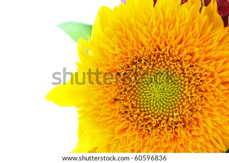 Beautiful sunflower isolated on white background, closeup
