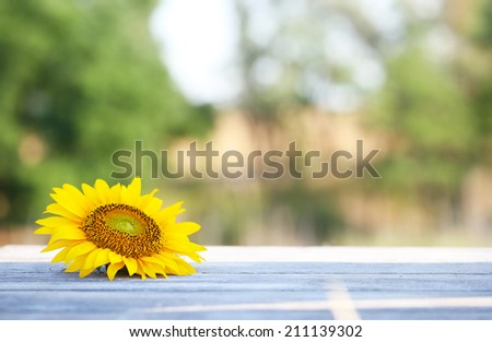 Beautiful sunflower on table on bright background - stock photo