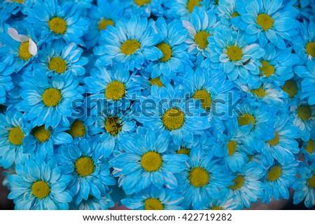 beautiful Sunflower petals closeup - stock photo