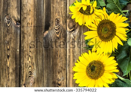 Beautiful Sunflowers On Rustic Wood Background Flowers Backgrounds