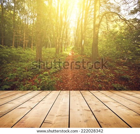 Beautiful sunlight in the autumn forest. Beauty nature background. Wooden floor. Background is blurred  - stock photo