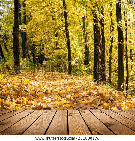 Beautiful sunlight in the autumn forest with wood planks floor interior background  - stock photo