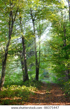 Beautiful sunlight in the forest - stock photo
