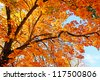 Beautiful, sunny autumn in the park - stock photo
