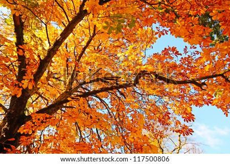 Beautiful, sunny autumn in the park - stock photo