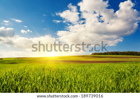 Beautiful sunny day in the field with blue sky. Overcast sky. Ukraine, Europe. Beauty world.  - stock photo