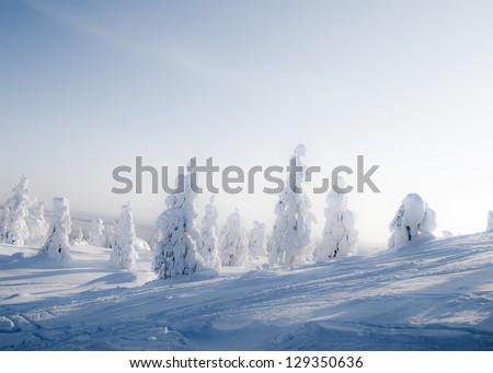 Beautiful sunny winter landscape in Lapland Finland - stock photo