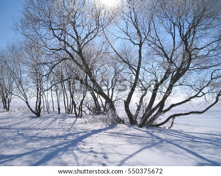 Beautiful sunny winter landscape with snow-covered field and trees