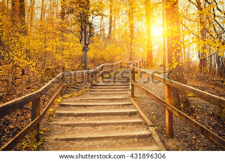 Beautiful Sunrise In Autumn Forest Near Zurich, Switzerland