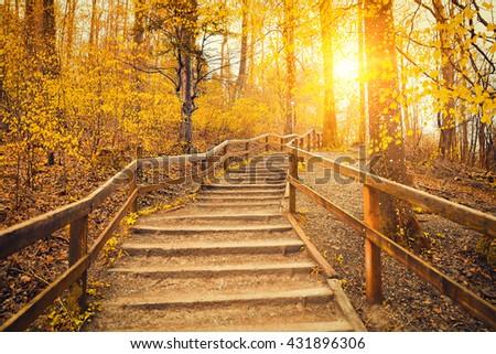 Beautiful Sunrise In Autumn Forest Near Zurich, Switzerland - stock photo