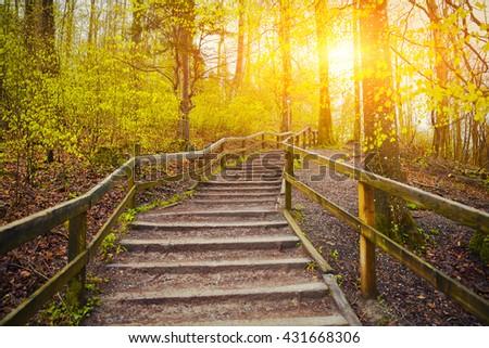 Beautiful Sunrise In Spring Forest Near Zurich, Switzerland - stock photo