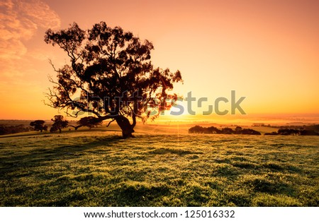 Beautiful sunrise in the Clare Valley - stock photo