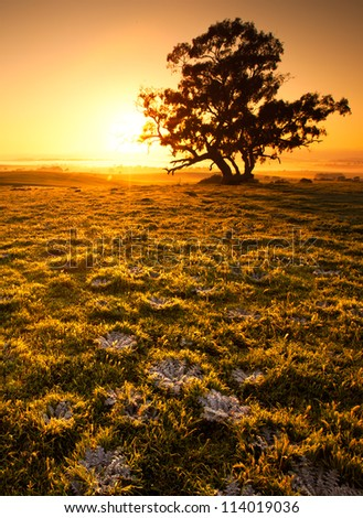Beautiful sunrise in the Clare Valley, South Australia - stock photo