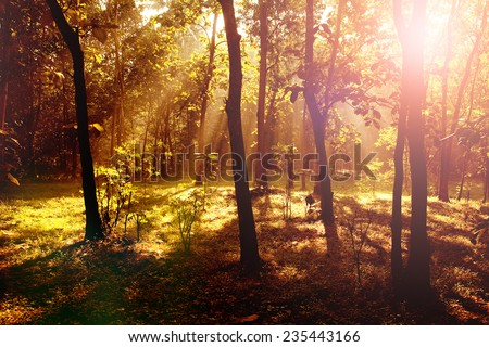 Beautiful sunrise in the forest with light shafts and shadows - stock photo