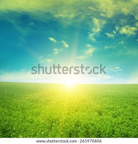 Beautiful sunrise over field pea - stock photo