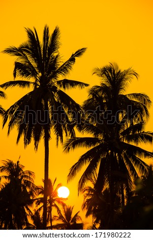 beautiful sunset and silhouette coconut tree