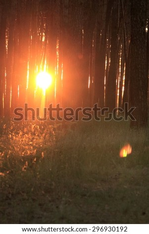 Beautiful sunset in a mystical magical forest - stock photo