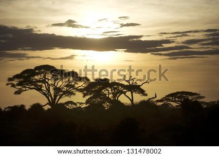 Beautiful sunset in Amboseli National Park 03 - stock photo
