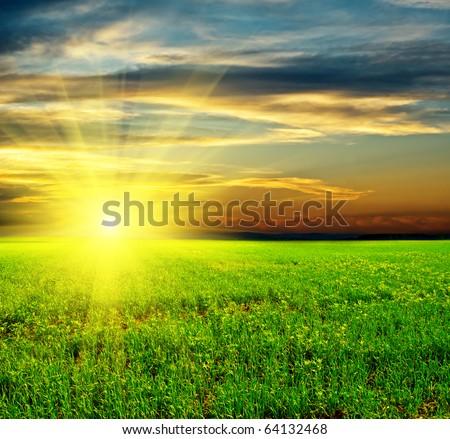 Beautiful sunset in green field. - stock photo
