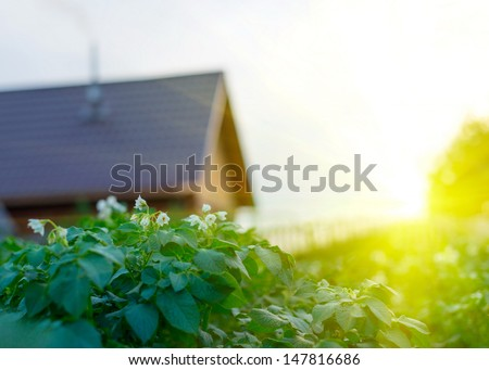 Beautiful sunset in peaceful green garden with garden house - stock photo