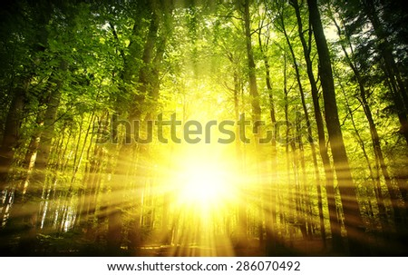 beautiful sunset in the forest, natural background - stock photo