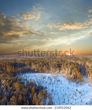 Beautiful sunset in wild pine forest. Winter sky with clouds. Sunset - stock photo