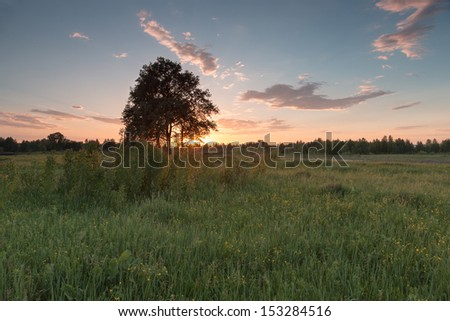 Beautiful sunset landscape with tree.