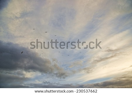 beautiful sunset off the Oregon coast, fall, many birds in the sky - stock photo