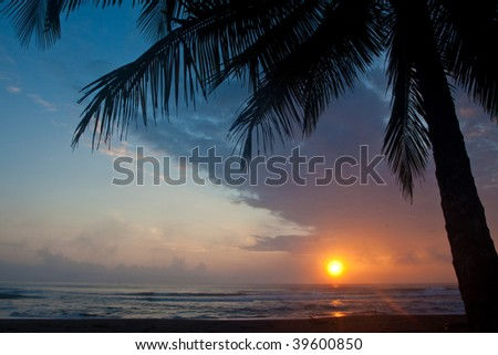 Beautiful sunset on the beach with palm tree