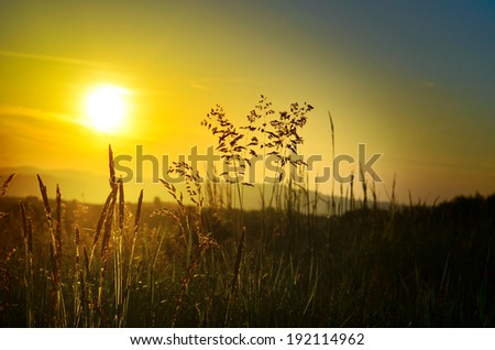 Beautiful sunset on the meadow through the grass, zen background