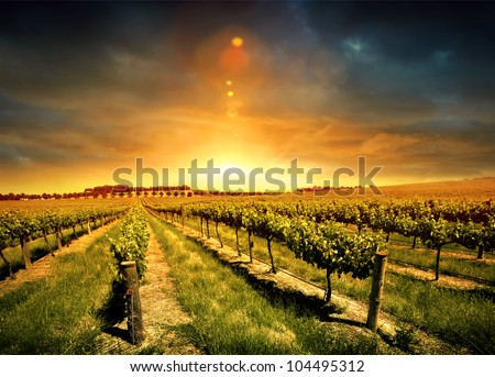 Beautiful Sunset over a Barossa Vineyard - stock photo
