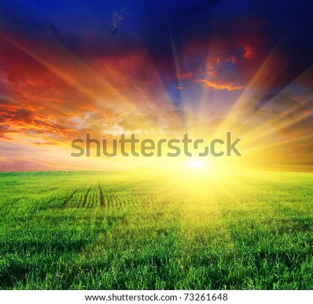 beautiful sunset over field with green grass - stock photo