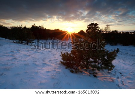 beautiful sunset over snowy winter forest, Nunspeet, Gelderland, Netherlands - stock photo