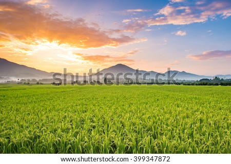 Beautiful sunset over the paddy fields at Phrao, Chiang Mai, Thailand. - stock photo