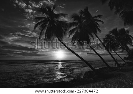 Beautiful sunset over the sea with a view at palms on the white beach on a Caribbean island of Barbados. Black and white - stock photo
