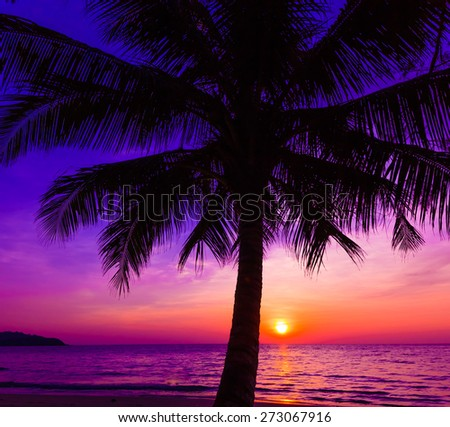 Beautiful sunset.  Sunset over the ocean with tropical palm trees.  Paradise beach - stock photo