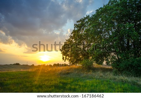 Beautiful sunset with a dramatic sky in the country with a lonely tree - stock photo