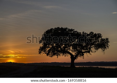 Beautiful sunset with a lonely tree