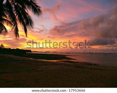 Beautiful sunset with a palmtree silhouette and sailboats at Airlie Beach, Australia - stock photo